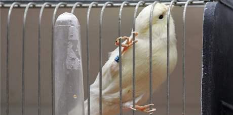 V Botanické zahradě v Brně se koná výstava exotického ptactva
