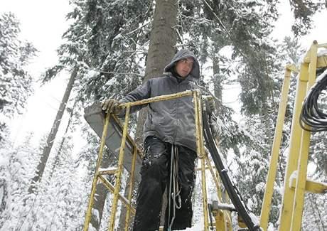 Dřevorubci pokáceli strom pro vánoční Staroměstské náměstí