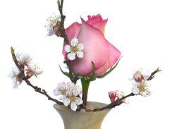 Barborky můžete kombinovat i s řezanými květinami – soulad růže a meruňkových květů je potěchou pro oko