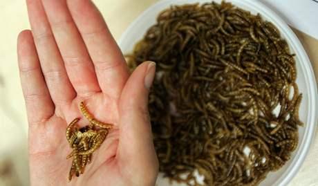 Vaření z hmyzu - Speciální vánoční menu