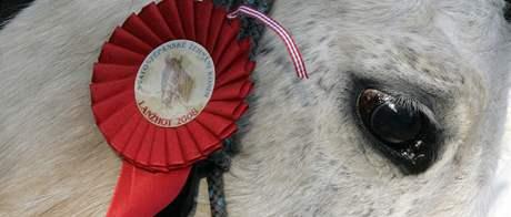 Na Štěpána se na náměstí v Lanžhotě sjelo asi 30 koní, kterým požehnal farář František Putna