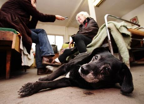 Útulek pro týraná a opuštěná zvířata