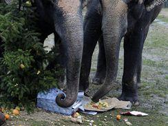 Pochutnali si i sloni