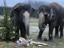 Sloni jsou vděčným objektem zájmu návštěvníků