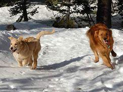 Během Silvestra svého psa pusťte navolno proběhnout pouze tam, kde nehrozí, že si někdo bude zkoušet odpalování petard
