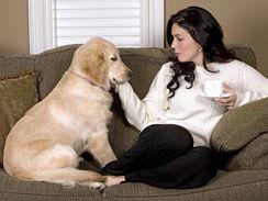 Považujete-li svého psa za člena rodiny, jistě vám není zatěžko strávit Silvestra s ním