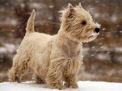 Navolno pobíhající pes se může leknout vystřelené petardy, zpanikařit a zaběhnout se
