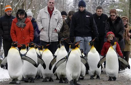Tučňáci v curyšské zoo (6.1.2009)