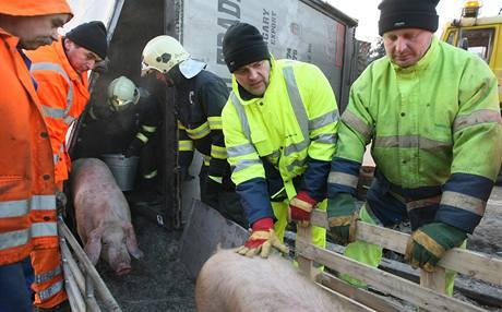 Nehoda kamionu, který převážel prasata