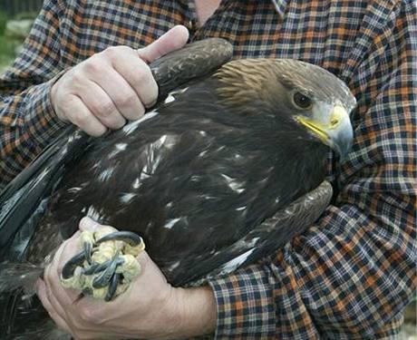 Petr Orel se zabývá návratem orla skalního do přírody už třetí rok.