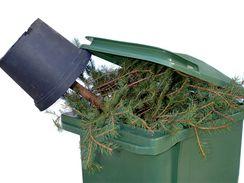 co se stromečkem po vánocích