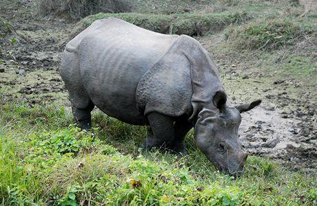 Nepál, Chitwanský národní park