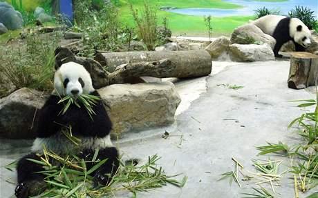Pandy Jüan Jüan a Tchuan Tchuan
