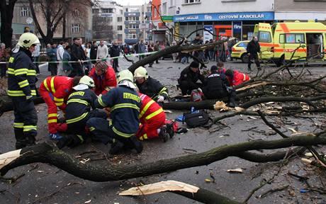 Spadlý strom v centru Zlína