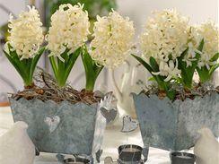 Hyacinty vám krásně dotvoří i atmosféu slavnostně prostřeného stolu.