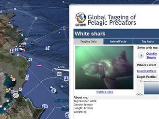 Google Earth - bílý žralok