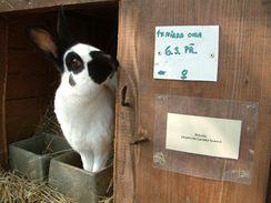 Adopce zvířat je i na Toulcově dvoře oblíbenou formou sponzoringu.