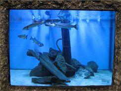 V dostatečně prostorném akváriu můžete chovat i dravé barakudy (Mořský svět, Praha).
