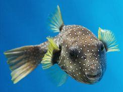 Možnost pozorovat mořské tvory z bezprostřední blízkosti přes sklo akvária je úžasná (hranobřich).