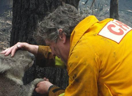 Koal� sami�ka dovolila sv�mu zachr�nci n�n� doteky.