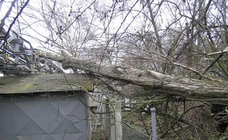 Vítr vyvracel na Plzeňsku desítky stromů