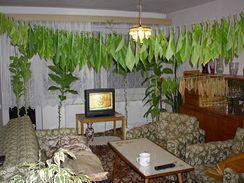 Jednotlivé listy věšte asi deset centimetrů od sebe