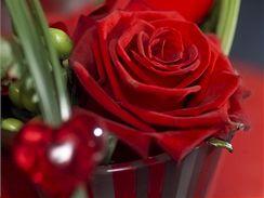 Červená růže je odjakživa symbolem lásky...