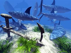 Hejno karibských útesových žraloků slídících za potravou.