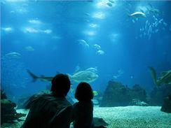 Možnost prohlédnout si žraloka z bezprostřední blízkosti přes sklo akvária je nezapomenutelným zážitkem pro děti i dospělé.