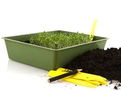 Jakmile rostlinky ve výsevní misce poporostou, měly by zůstat odkryté a většinou je potřeba je vyjednotit.