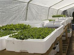 I na okenním parapetu je potřeba rostlinkách vytvořit podobné podmínky jako ve skleníku.