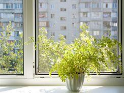 Rostliny potřebují dostatek světla, nesmí je však spálit ostré sluníčko.