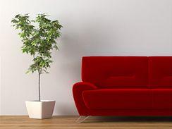 Moderní interiér živé rostliny krásně doplní. Za to chtějí jen odpovídající péči.