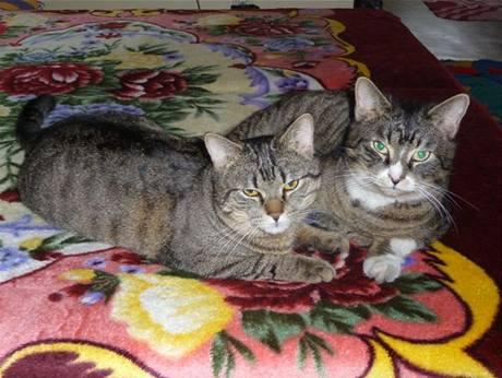 Jája, Pája a Pulíšek vypadají jako z reklamy na kočičí žrádlo.