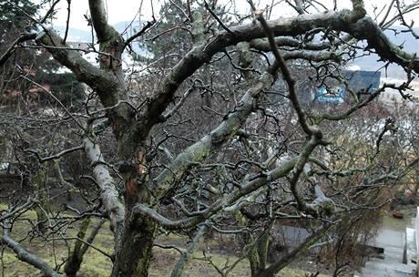 Strom tvarujte tak, aby větve nebyly pod sebou