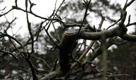 Když je strom dostatečně prosvěný, nedrží se něm houbové nemoci