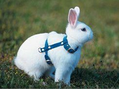 Pro králíky najdete ve zverimexu speciální vodítka v podobě jakéhosi postroje, který králíka neškrtí ani neomezuje v pohybu.