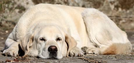 Pomozte najít nevidomému zaběhnutého vodícího psa