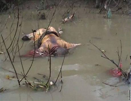 Fotografii zastřeleného barmského mnicha získaly tiskové agentury z videonahrávky Democratic Voice of Burma