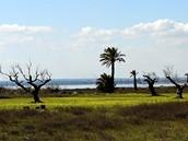 Tunisko, Mahdia. Jezero Moknine
