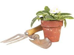 Africké fialce vyberte substrát pro pokojové květiny.