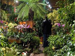 Už při nákupu si nechte poradit, do jakého substrátu vybranou rostlinu nejlépe přesadit.