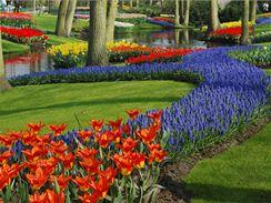Zámecký park Keukenhof v Holandsku, největší květinový park v Evropě, můžete letos navštívit od 19. března do 21. května.