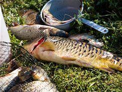 Pro všechny ryby platí, že čím dříve se po vylovení zpracují v kuchyni, tím lépe.