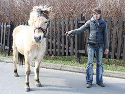 Doslova kdekoliv tu můžete potkat koně.
