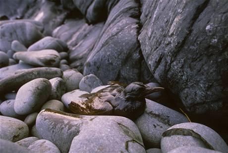 Havárie ropného tankeru Exxon Valdez u Aljašky v březnu 1989