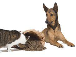 Psí žrádlo kočkám škodí, protože jeho složení neodpovídá potřebám kočičího organismu.