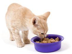 Strava určená pro kočky má složení přizpůsobené potřebám kočičího organismu.