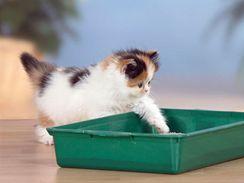 Už velmi malé kotě se naučí chodit na záchod a svůj