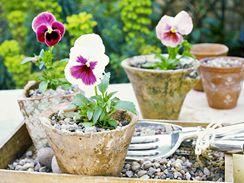 Ve stěnách cihlových květináčů se usazují soli, které se posléze vymývají do substrátu.